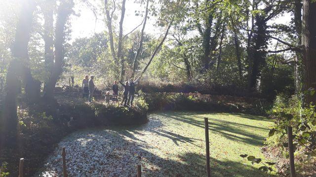 Woodland Hazel Hurdling-2