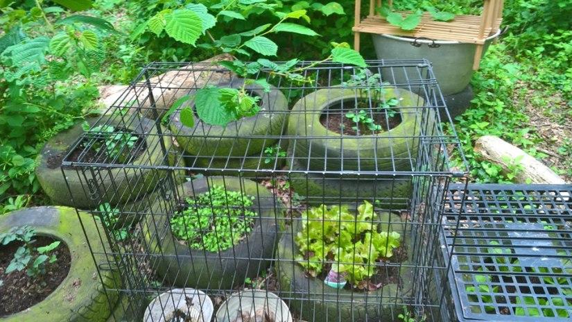 KFS Wednesday garden