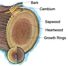 tree_anatomy